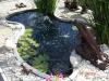 fish-ponds-010